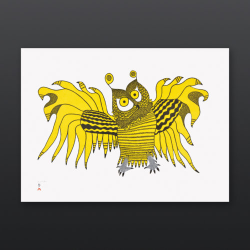 Ornamental Owl Ooloosie Saila Inuit Stonecut Cape Dorset Print 2017